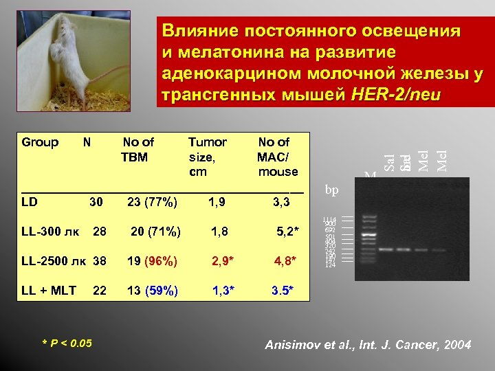 Group N Tumor No of size, MAC/ cm mouse _____________________ LD 30 23 (77%)