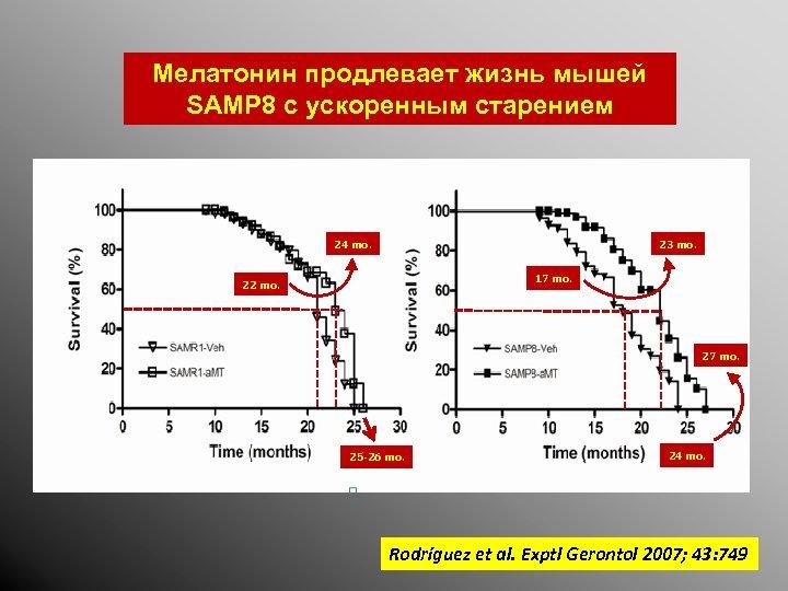 Мелатонин продлевает жизнь мышей SAMP 8 с ускоренным старением 24 mo. 23 mo. 17