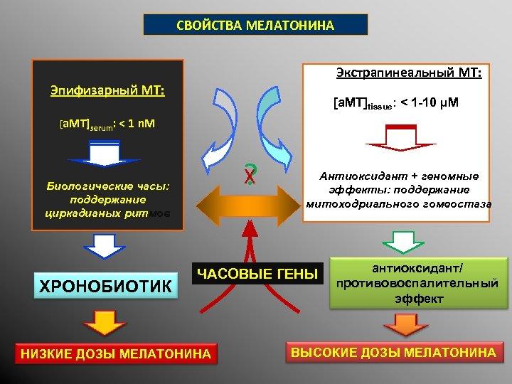 СВОЙСТВА МЕЛАТОНИНА Экстрапинеальный MT: Эпифизарный MT: [a. MT]tissue: < 1 -10 µM [a. MT]serum: