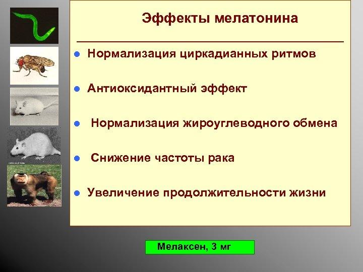 Эффекты мелатонина _________________ l Нормализация циркадианных ритмов l Антиоксидантный эффект l Нормализация жироуглеводного обмена