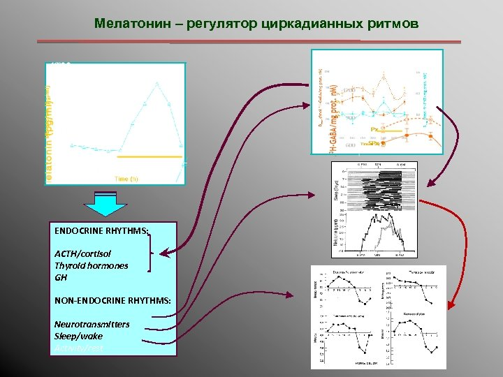 Мелатонин – регулятор циркадианных ритмов ENDOCRINE RHYTHMS: ACTH/cortisol Thyroid hormones GH NON-ENDOCRINE RHYTHMS: Neurotransmitters