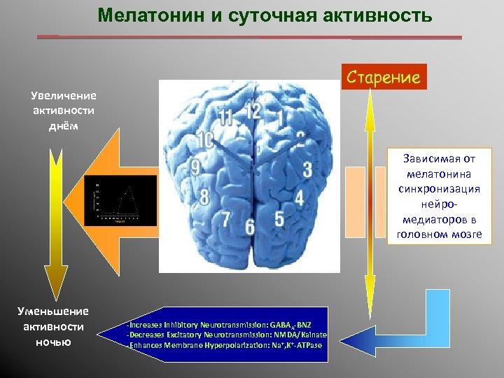Мелатонин и суточная активность Старение Увеличение активности днём Зависимая от мелатонина синхронизация нейромедиаторов в