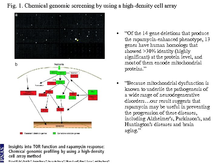 """Fig. 1. Chemical genomic screening by using a high-density cell array • """"Of the"""