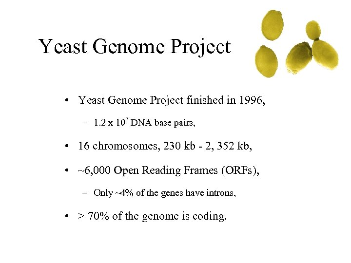 Yeast Genome Project • Yeast Genome Project finished in 1996, – 1. 2 x