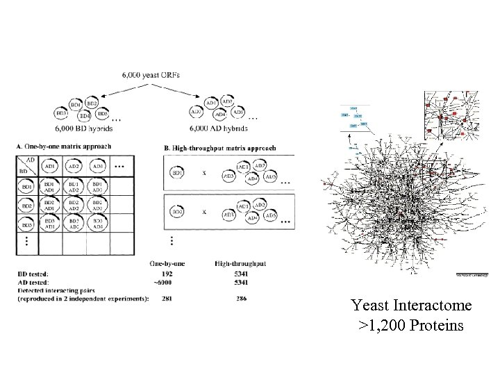 Yeast Interactome >1, 200 Proteins