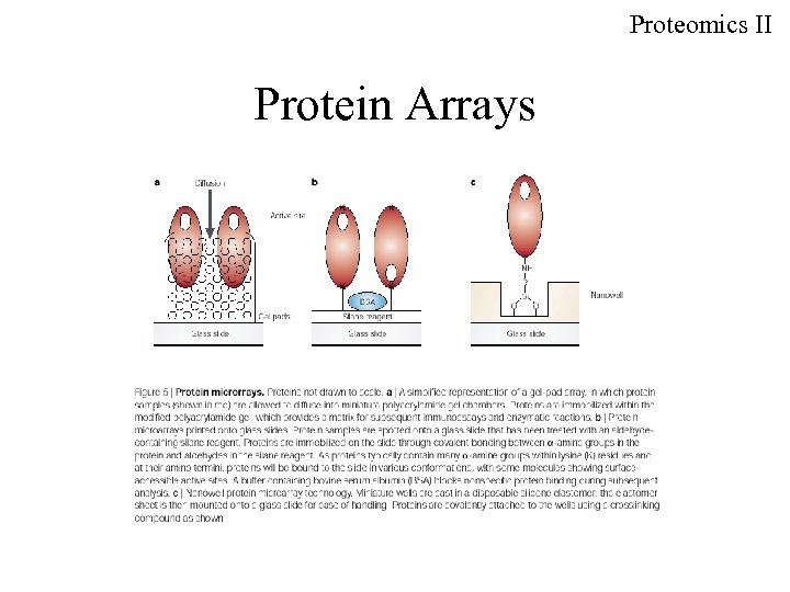 Proteomics II Protein Arrays
