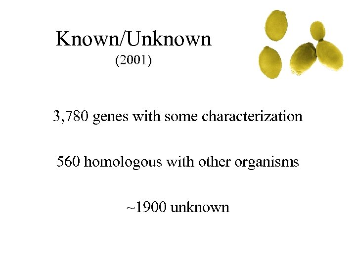 Known/Unknown (2001) 3, 780 genes with some characterization 560 homologous with other organisms ~1900