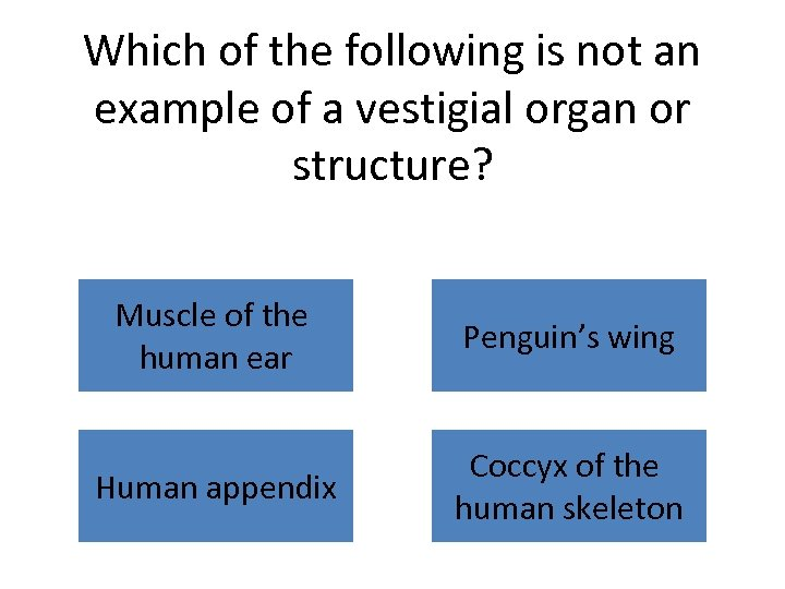 Which of the following is not an example of a vestigial organ or structure?