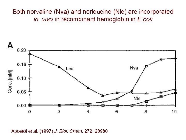 Both norvaline (Nva) and norleucine (Nle) are incorporated in vivo in recombinant hemoglobin in