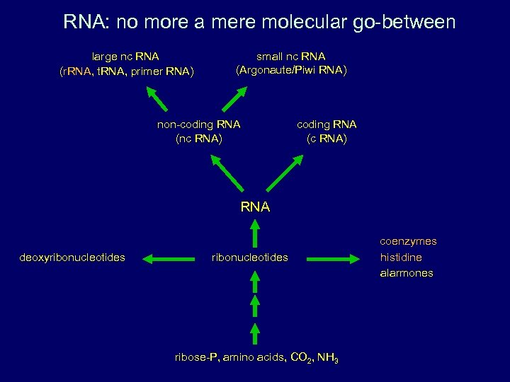 RNA: no more a mere molecular go-between large nc RNA (r. RNA, t. RNA,