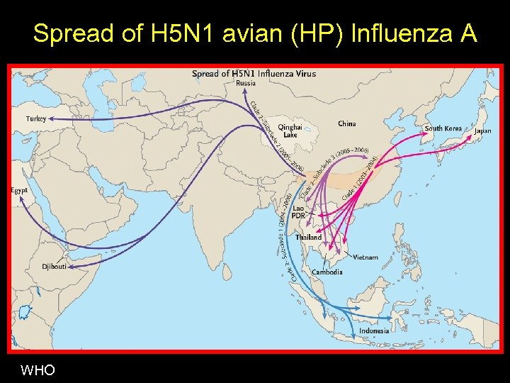 Spread of H 5 N 1 avian (HP) Influenza A WHO
