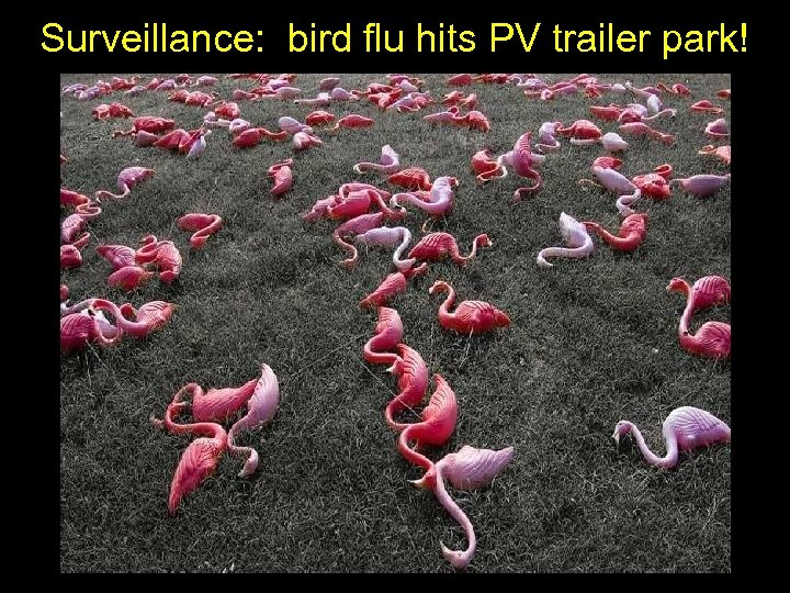 Surveillance: bird flu hits PV trailer park!