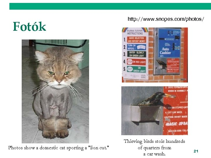 Fotók Photos show a domestic cat sporting a