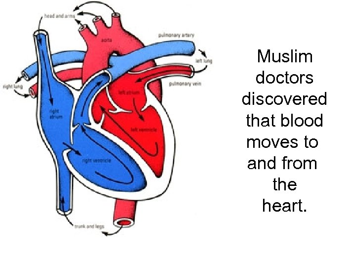 Muslim doctors discovered that blood moves to and from the heart.