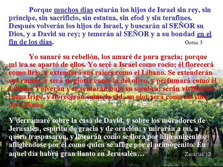 Porque muchos días estarán los hijos de Israel sin rey, sin príncipe, sin sacrificio,