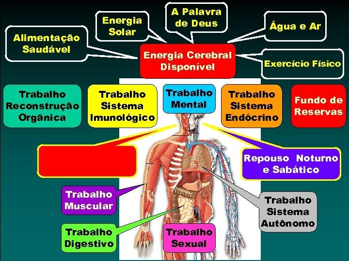 Alimentação Saudável Trabalho Reconstrução Orgânica A Palavra de Deus Energia Solar Água e Ar