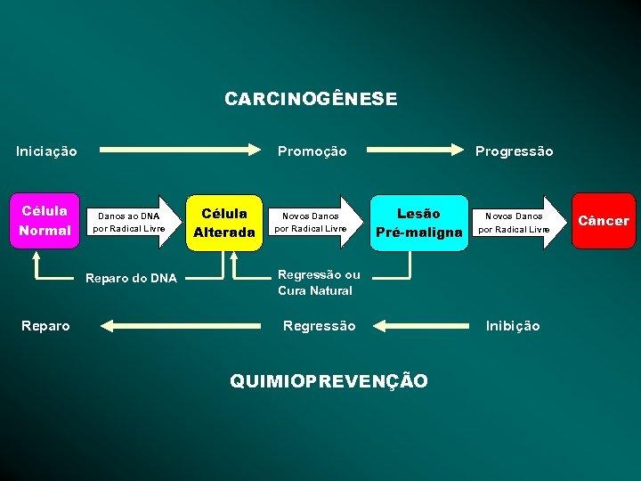 CARCINOGÊNESE Iniciação Célula Normal Promoção Danos ao DNA por Radical Livre Reparo do DNA