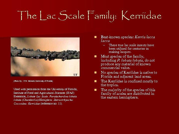 The Lac Scale Family: Kerriidae n Best-known species: Kerria lacca – n n (Photo