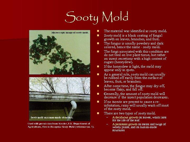 Sooty Mold n n n n n The material was identified as sooty mold.