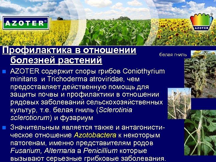 Профилактика в отношении болезней растений n n белая гниль AZOTER содержит споры грибов Coniothyrium