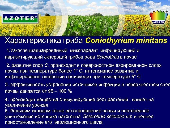 Характеристика гриба Coniothyrium minitans 1. Узкоспециализированный микопаразит инфицирующий и паразитирующий склероций грибов рода Sclerotínia