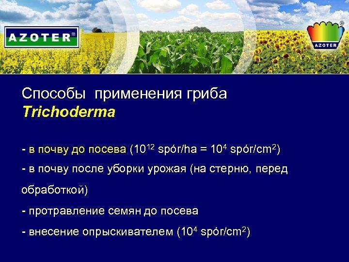 Способы применения гриба Trichoderma - в почву до посева (1012 spór/ha = 104 spór/cm