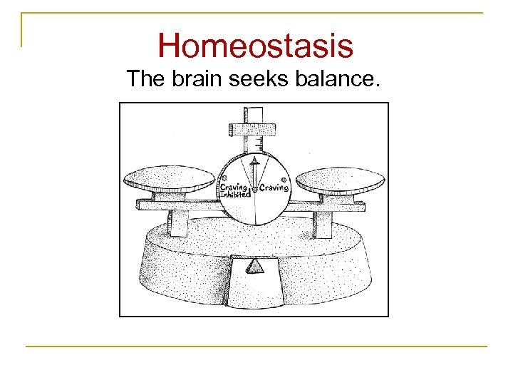 Homeostasis The brain seeks balance.