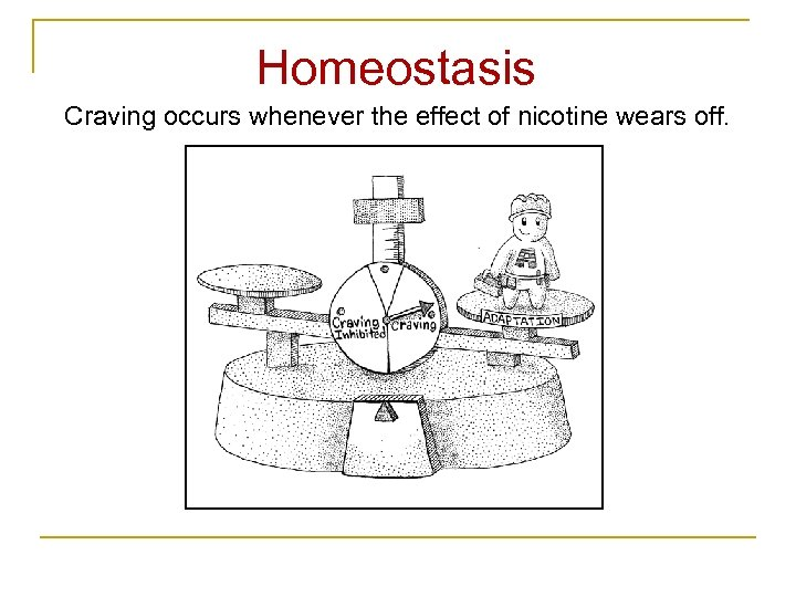 Homeostasis Craving occurs whenever the effect of nicotine wears off.