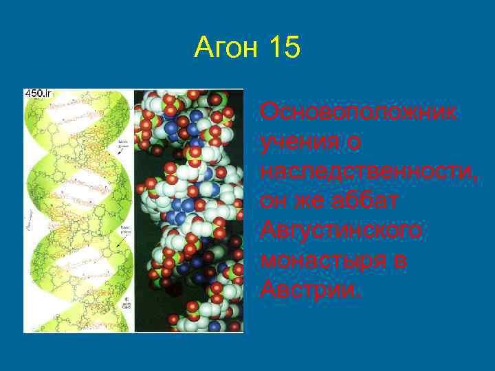 Агон 15 Основоположник учения о наследственности, он же аббат Августинского монастыря в Австрии.