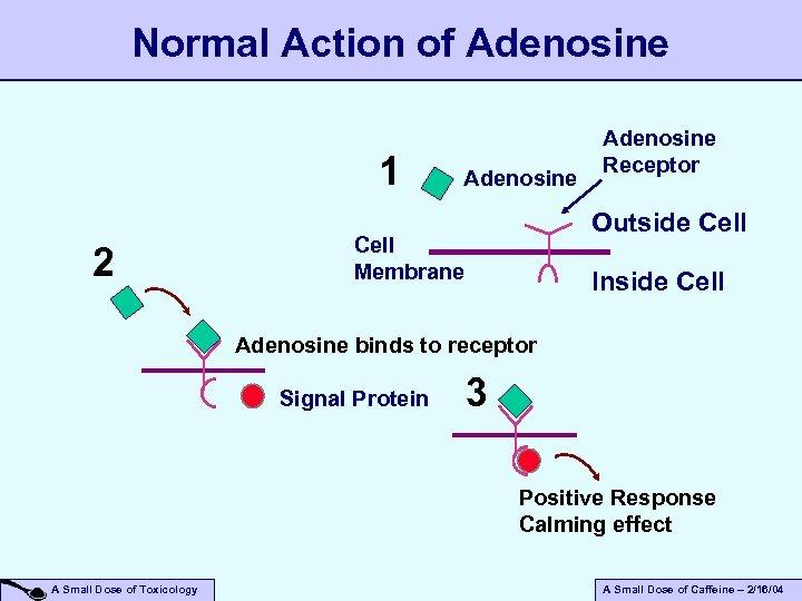 Normal Action of Adenosine 1 2 Adenosine Receptor Outside Cell Membrane Inside Cell Adenosine