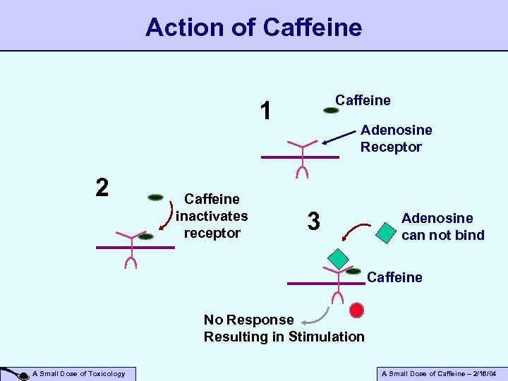 Action of Caffeine 1 2 Caffeine inactivates receptor Adenosine Receptor 3 Adenosine can not