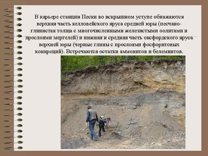 В карьере станции Пески во вскрышном уступе обнажаются верхняя часть келловейского яруса средней юры