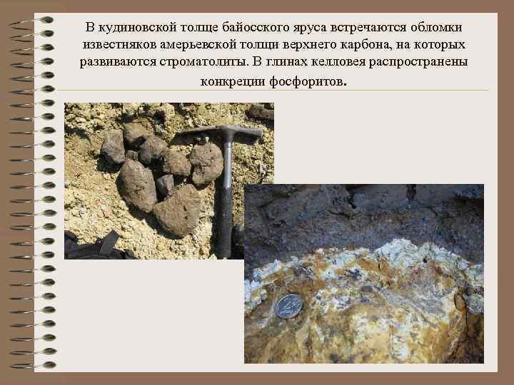 В кудиновской толще байосского яруса встречаются обломки известняков амерьевской толщи верхнего карбона, на которых
