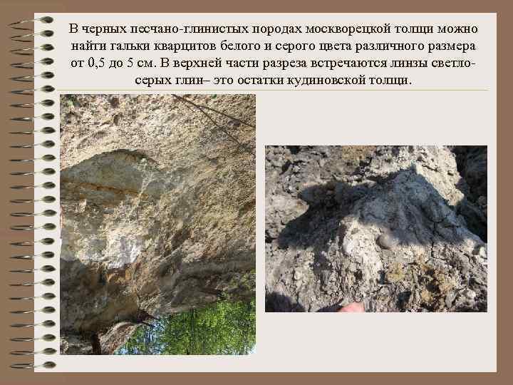 В черных песчано-глинистых породах москворецкой толщи можно найти гальки кварцитов белого и серого цвета