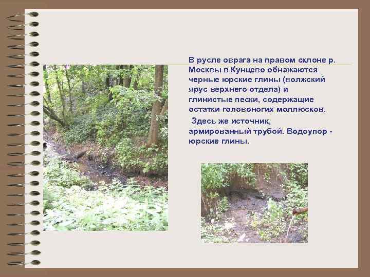 В русле оврага на правом склоне р. Москвы в Кунцево обнажаются черные юрские глины