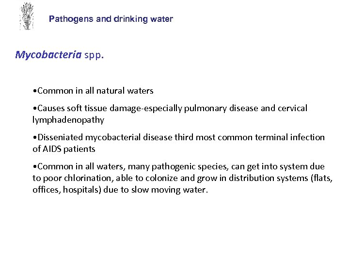 Pathogens and drinking water Mycobacteria spp. • Common in all natural waters • Causes