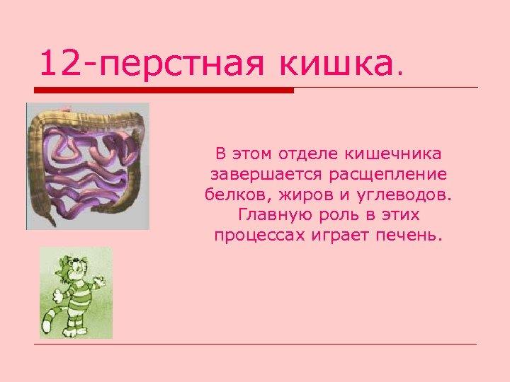 12 -перстная кишка. В этом отделе кишечника завершается расщепление белков, жиров и углеводов. Главную