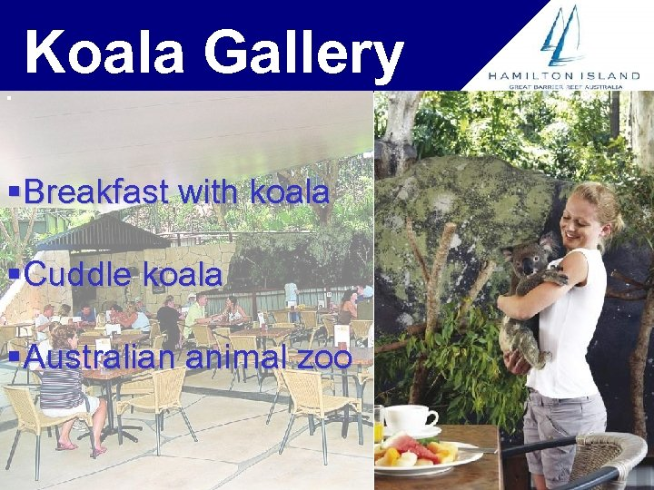 Koala Gallery § §Breakfast with koala §Cuddle koala §Australian animal zoo