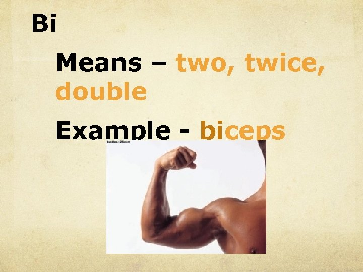 Bi Means – two, twice, double Example - biceps