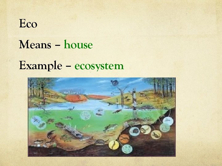 Eco Means – house Example – ecosystem