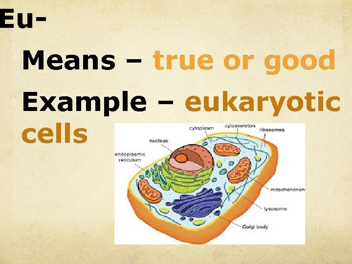Eu. Means – true or good Example – eukaryotic cells