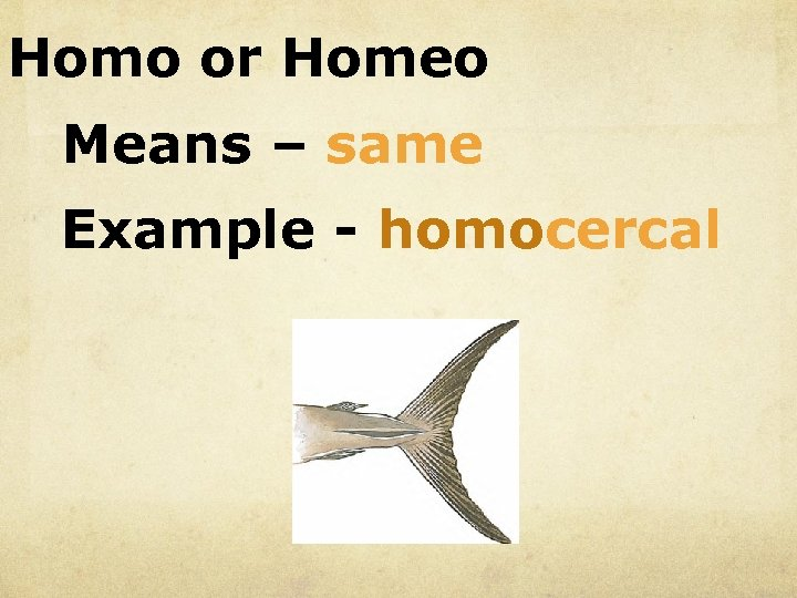 Homo or Homeo Means – same Example - homocercal
