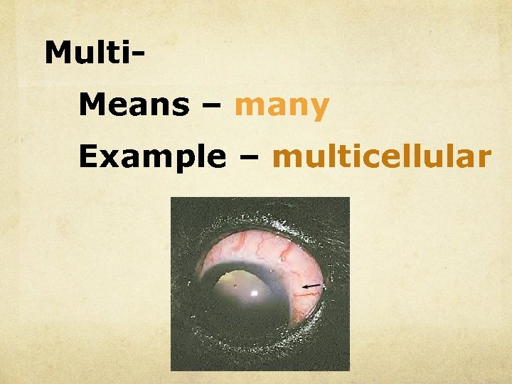 Multi. Means – many Example – multicellular