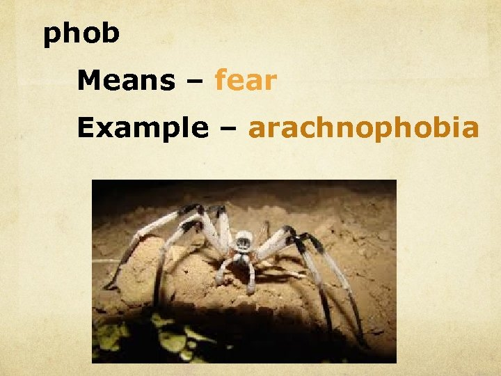 phob Means – fear Example – arachnophobia