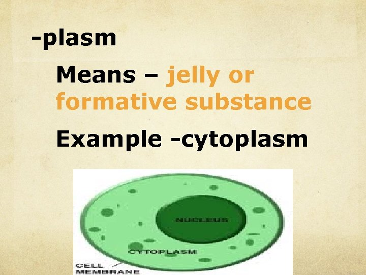 -plasm Means – jelly or formative substance Example -cytoplasm