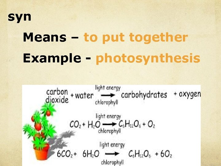syn Means – to put together Example - photosynthesis