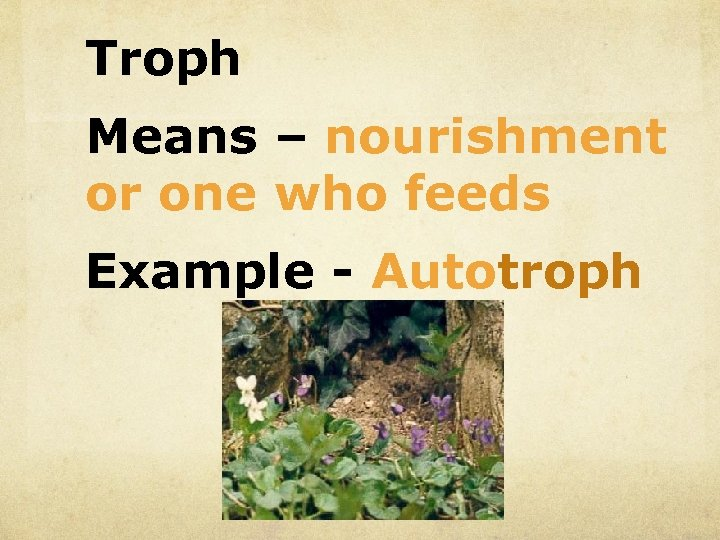 Troph Means – nourishment or one who feeds Example - Autotroph