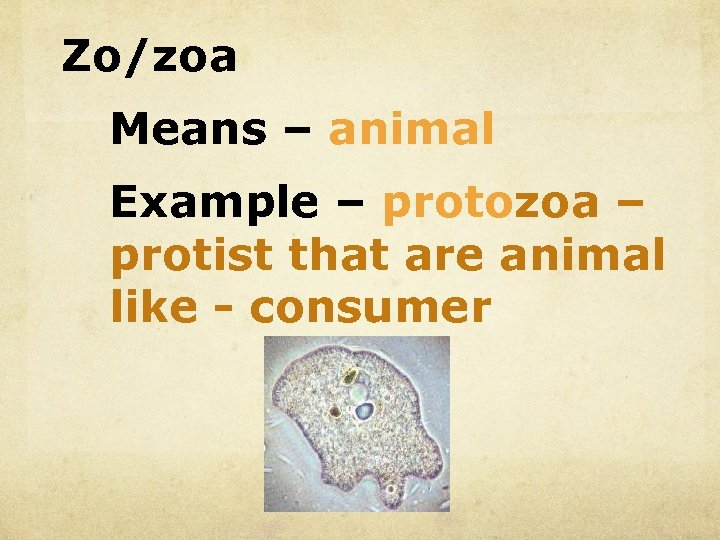 Zo/zoa Means – animal Example – protozoa – protist that are animal like -