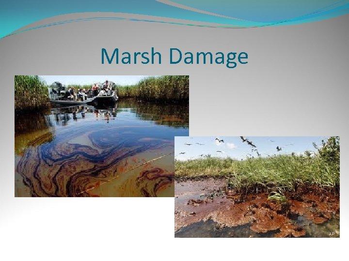 Marsh Damage