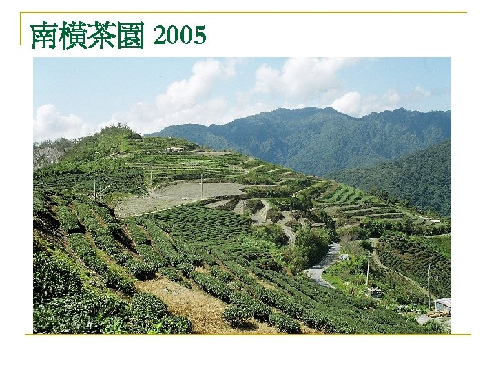 南橫茶園 2005